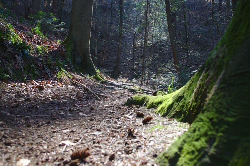 Weg in de bossen dichtbij Freiburg-im-Breisgau, Duitsland stock foto