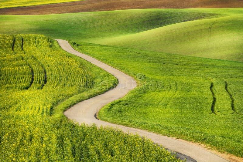 Weg in de groene gebiedsgolven stock foto's