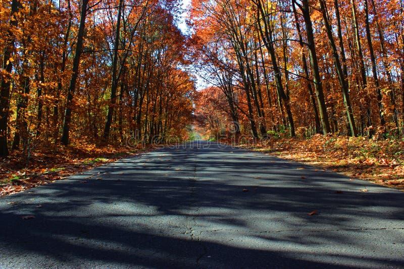 Weg in de herfst stock afbeelding