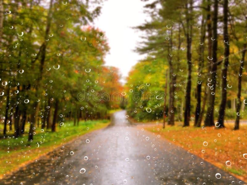 Weg in de herfst op een regenachtige dag stock foto's