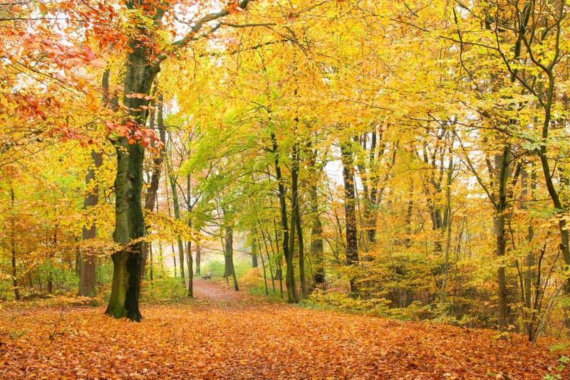 Weg in de herfstbos royalty-vrije stock afbeelding