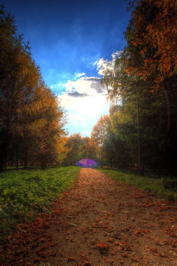 Weg in de herfstpark royalty-vrije stock foto