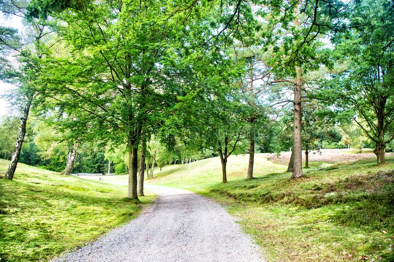 Weg in de lente of de zomerbos, aard Weg in houten landschap, milieu Voetpad onder groene bomen, ecologie De aard, omgeeft stock foto's