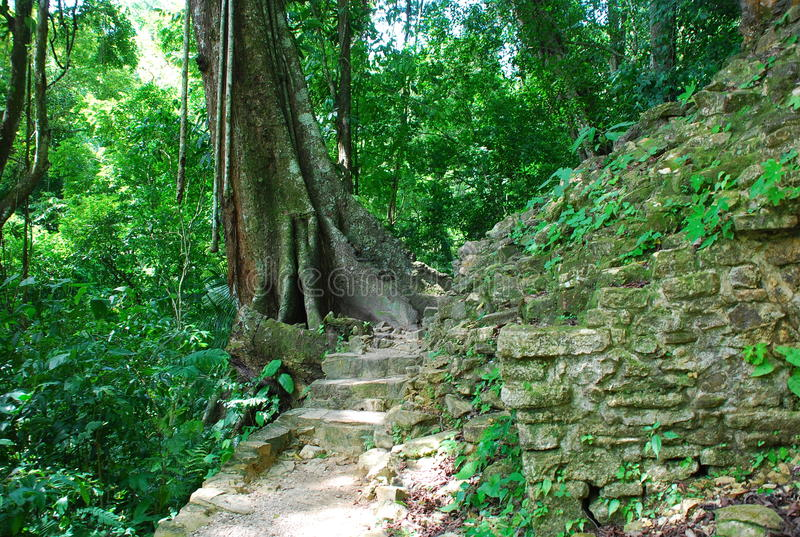 Weg in de wildernis, Palenque, Mexico stock afbeeldingen