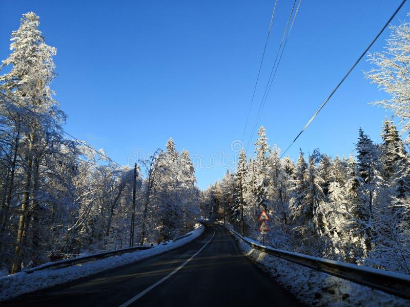 Weg in de winterbos stock afbeeldingen