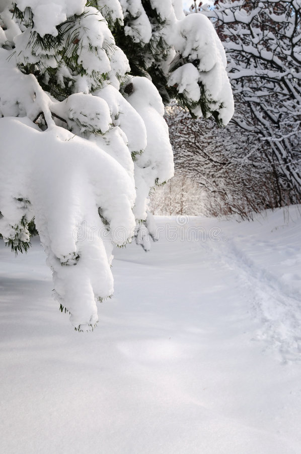 Weg in de winterbos stock foto