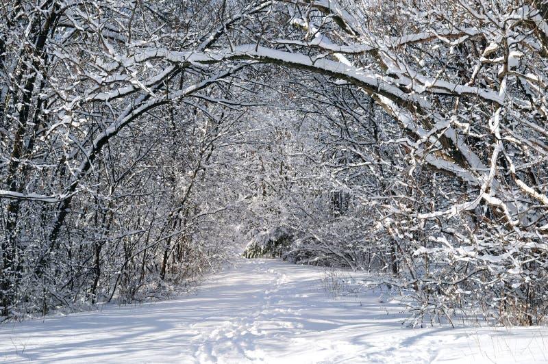 Weg in de winterbos stock fotografie