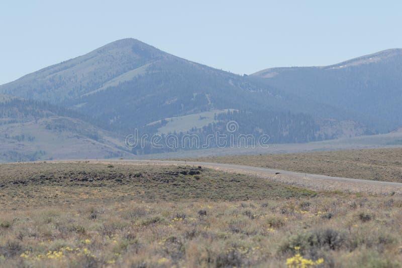 Weg in de Woestijn weg wordt geplooid die stock foto