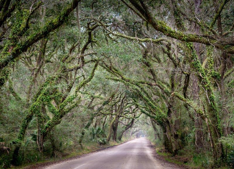 Weg de Zuid- van Carolina dichtbij Charleston en plantkundebaai kijkt als een venster in de wildernis stock foto's