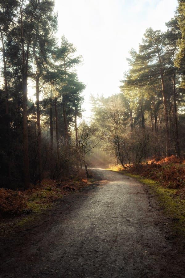 Weg, der durch einen Wald mit der Sonne scheint durch die Bäume führt lizenzfreie stockbilder