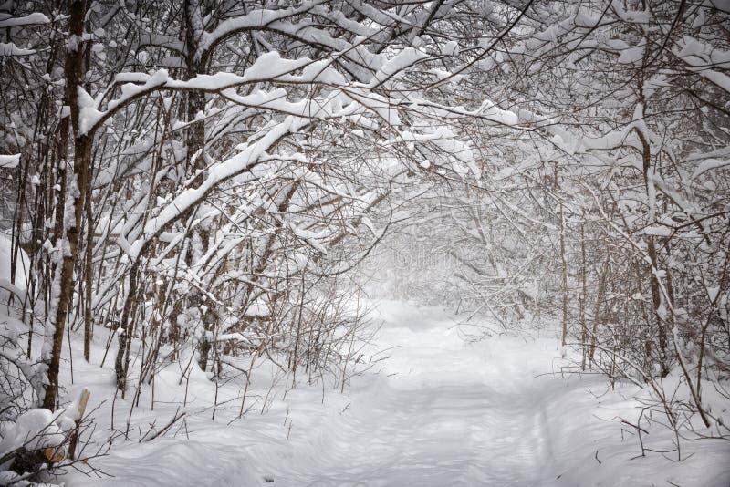 Weg des verschneiten Winters im Wald stockfotografie