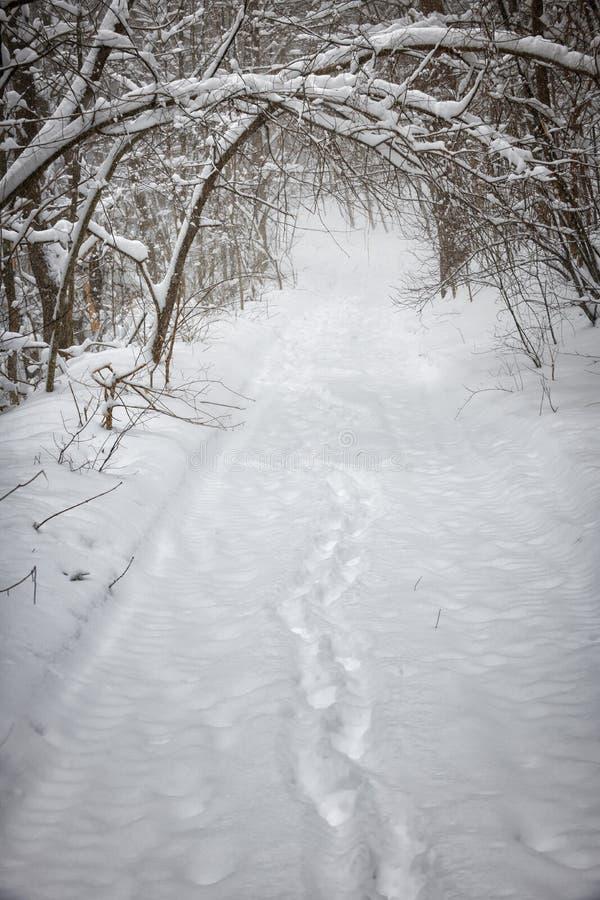 Weg des verschneiten Winters im Wald lizenzfreie stockfotografie
