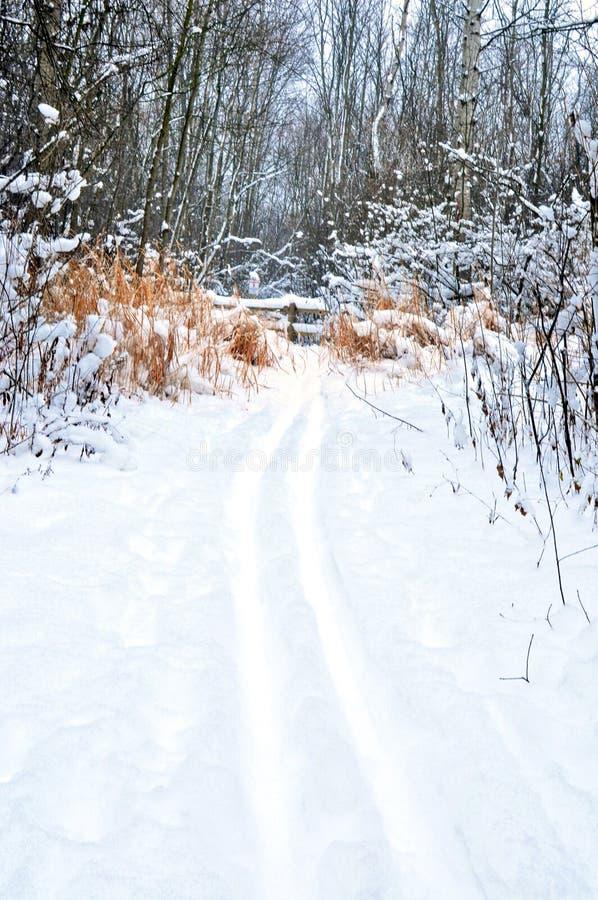 Weg des verschneiten Winters in Wald lizenzfreies stockbild
