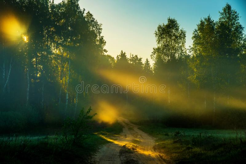 Weg dichtbij bos bij zonsopganglicht stock afbeelding