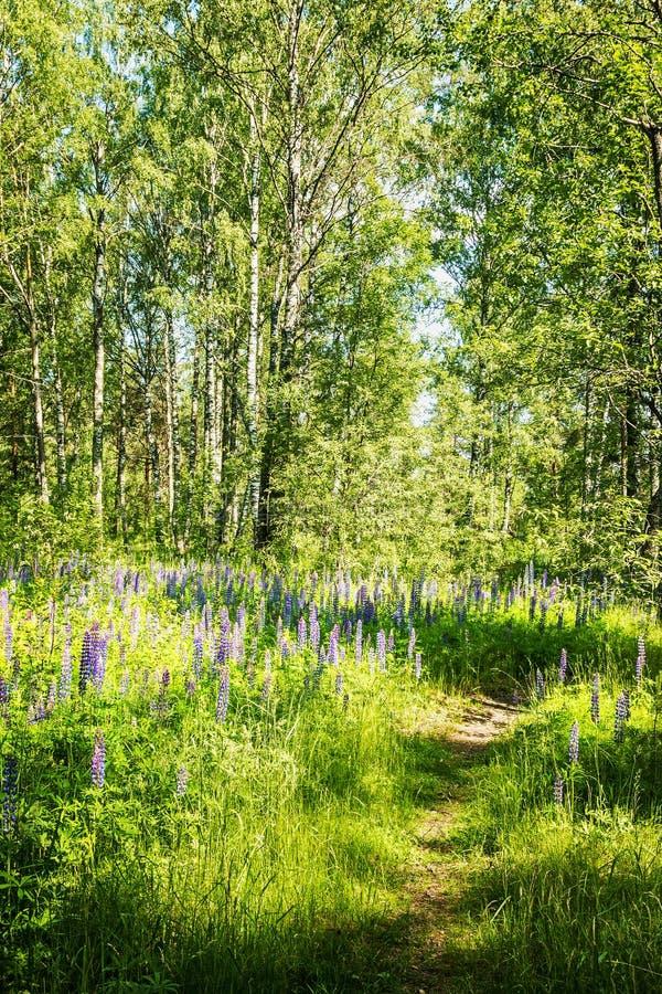Weg die door het bos en een opheldering met bloemen gaat royalty-vrije stock fotografie
