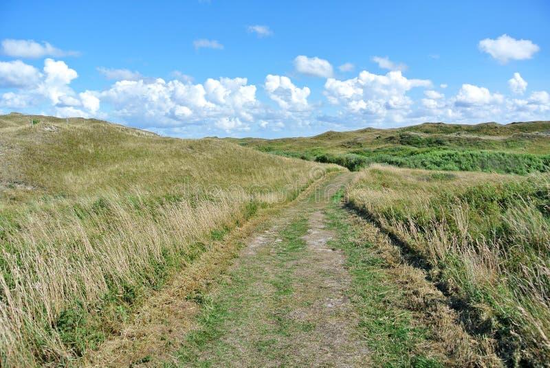 Weg die door nationaal park op eiland Texel in Nederland op een zonnige dag met blauwe hemel leiden royalty-vrije stock foto's