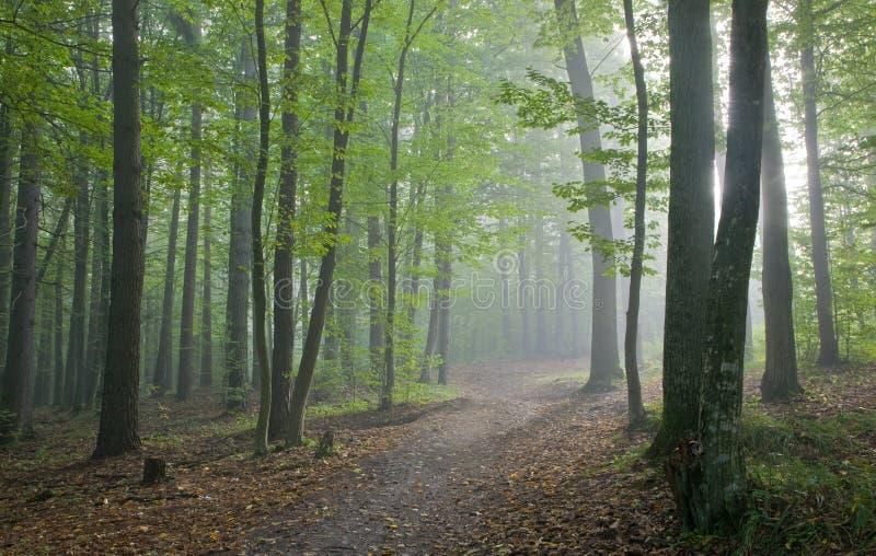 Weg die nevelig herfstbos kruist stock foto's