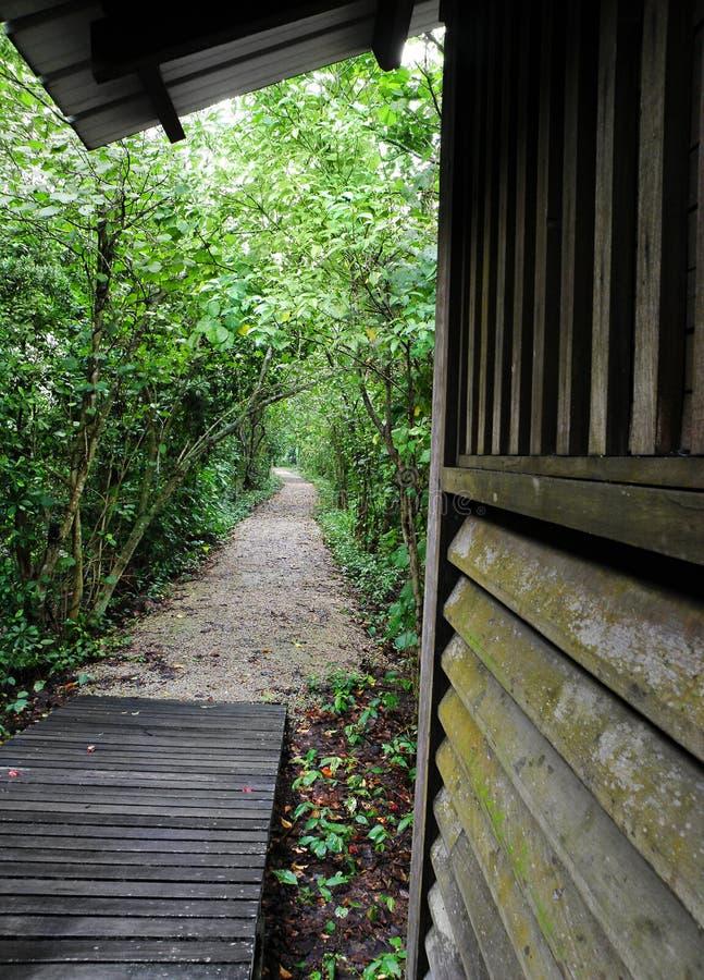 Weg die tot houten hut in wildernis leidt stock foto