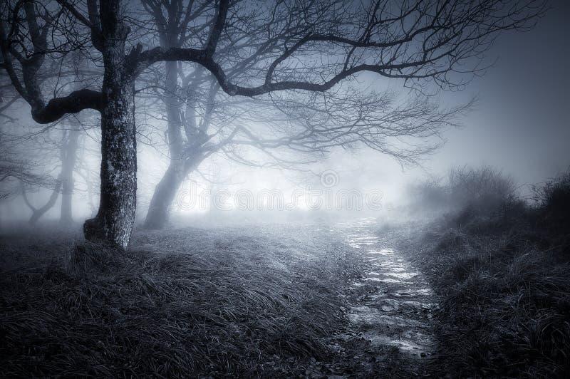 Weg in donker en eng bos royalty-vrije stock afbeeldingen