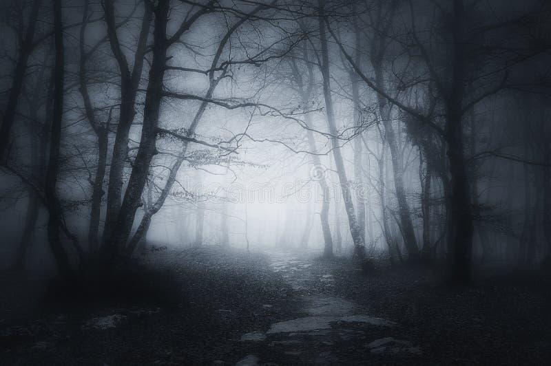 Weg in donker en eng bos royalty-vrije stock foto