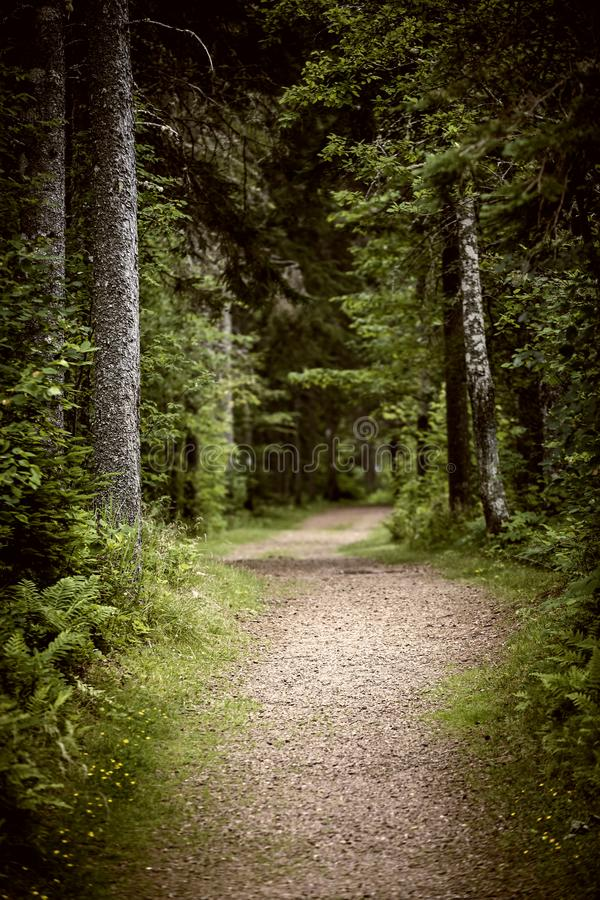 Weg in donker humeurig bos stock afbeelding