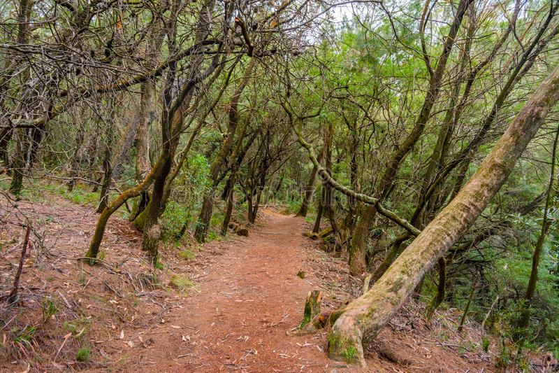 Weg door Australisch bos stock afbeeldingen