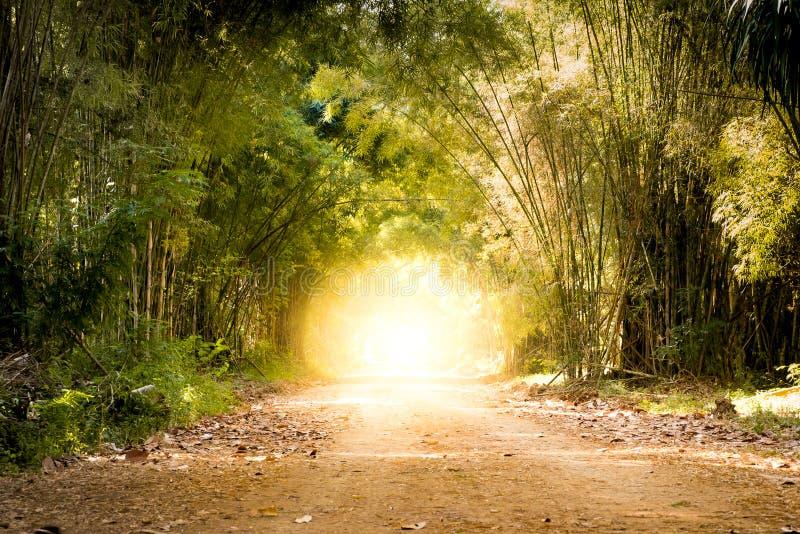 Weg door bamboe bos en licht eind het eind van tunnel stock afbeeldingen