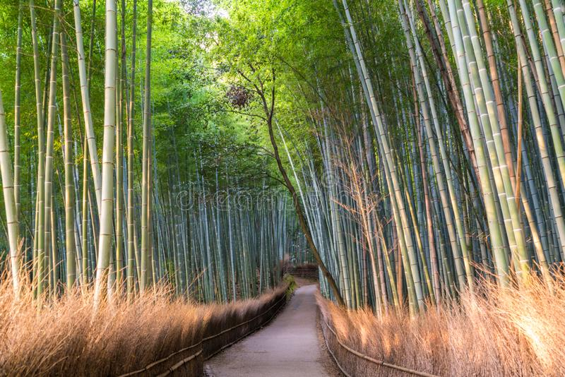 Weg door bamboebos in Sagano, Arashiyama, Kyoto stock afbeelding