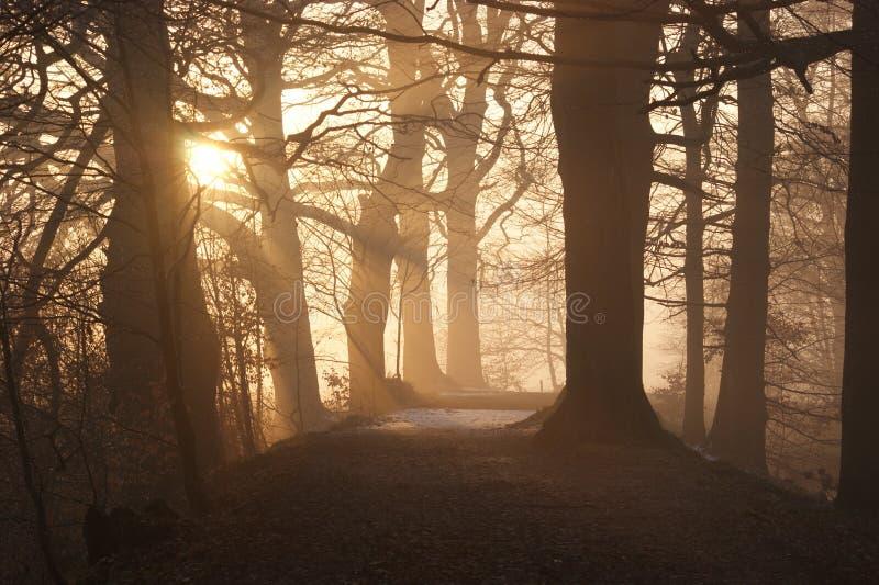 Weg door bos bij zonsondergang royalty-vrije stock foto