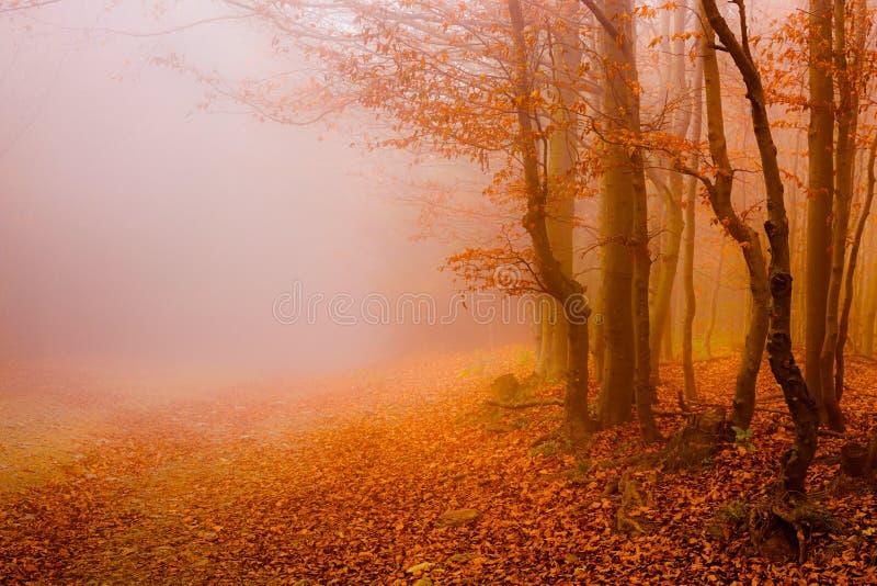 Weg door de van de de herfst bos? zon en kleur bladeren stock afbeelding