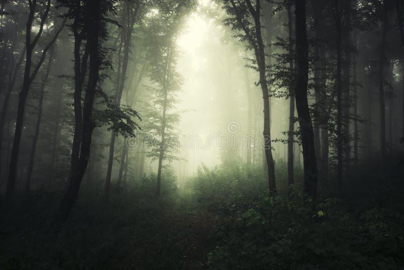 Weg door donker griezelig hout stock foto's