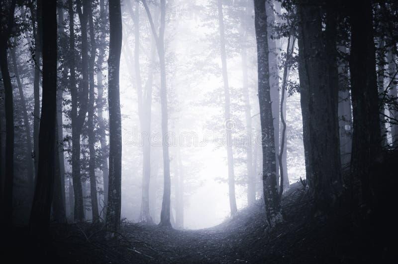 Weg door donker humeurig bos met mist royalty-vrije stock fotografie