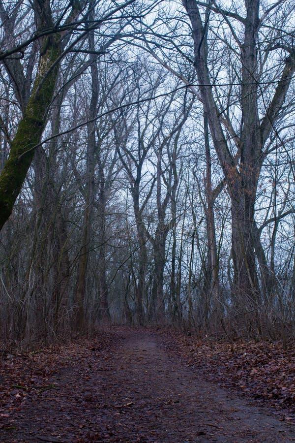 Weg door een donker bos royalty-vrije stock foto's