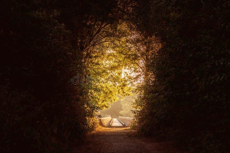 Weg door een donker bos met een licht aan het eind van het bos stock afbeelding
