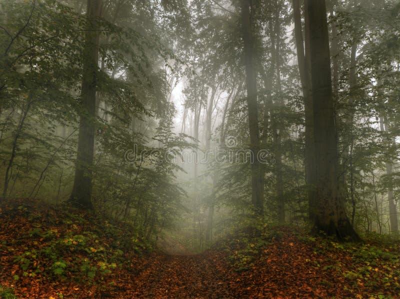 Weg door een mistig bos stock fotografie