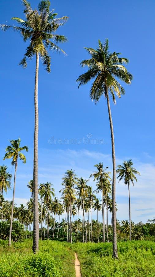 Weg door een palmgebied stock foto's