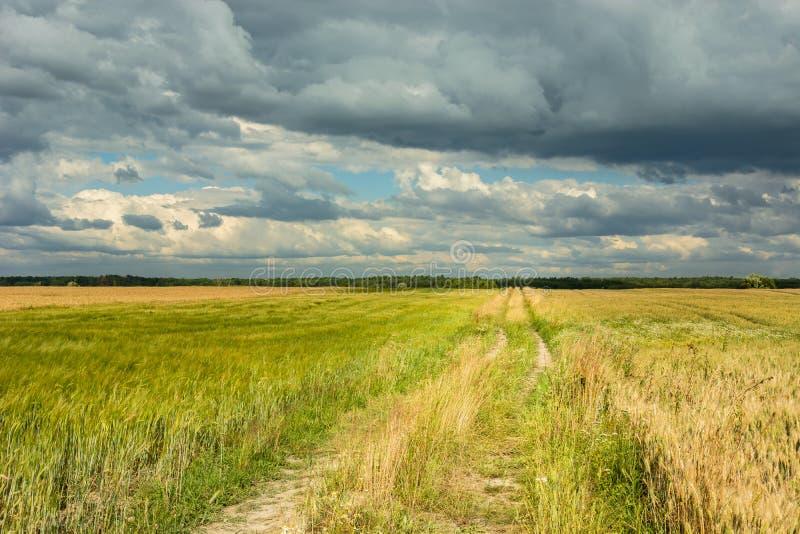 Weg door een weide en donkere wolken in de hemel stock afbeeldingen