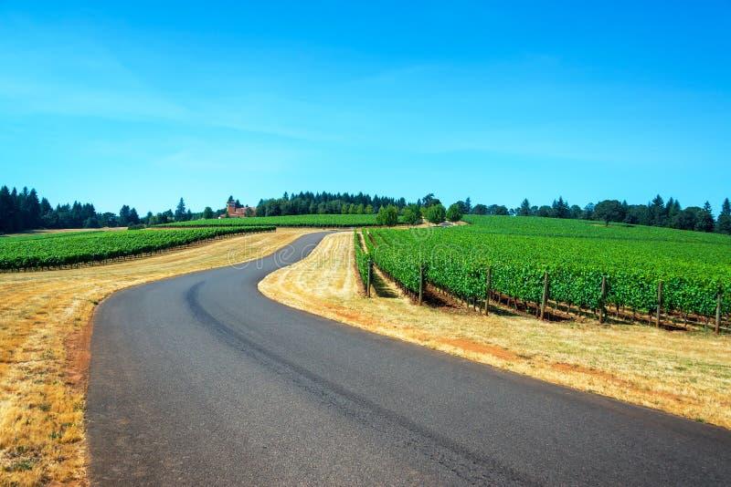 Weg door een wijngaard royalty-vrije stock foto