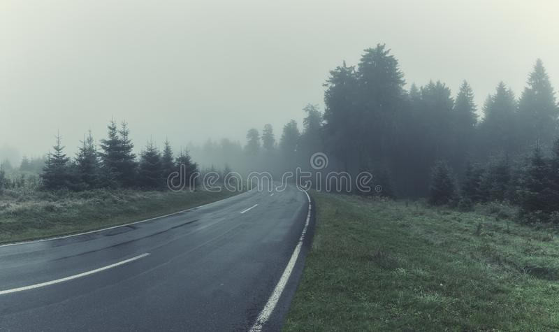 Weg door Forest With Mourning Fog royalty-vrije stock fotografie