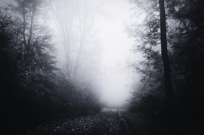 Weg door griezelig achtervolgd bos met blauwe mist royalty-vrije stock fotografie