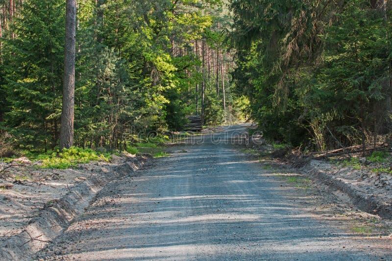 Weg door het bos stock fotografie