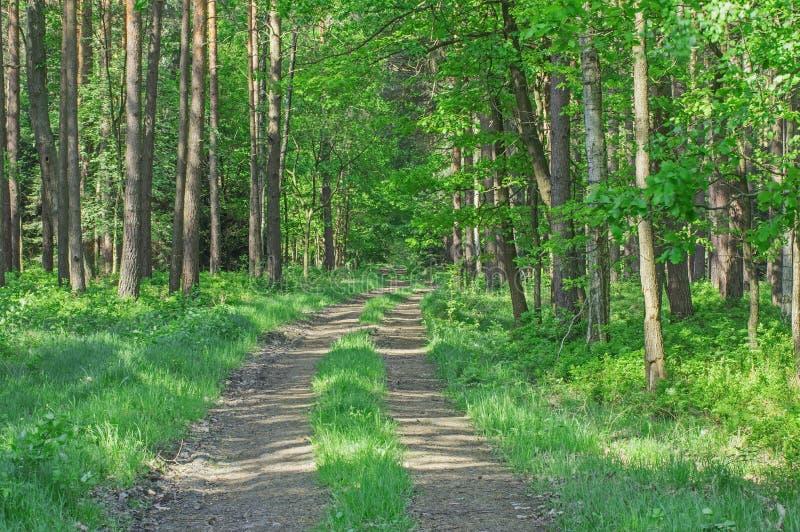 Weg door het bos stock afbeeldingen