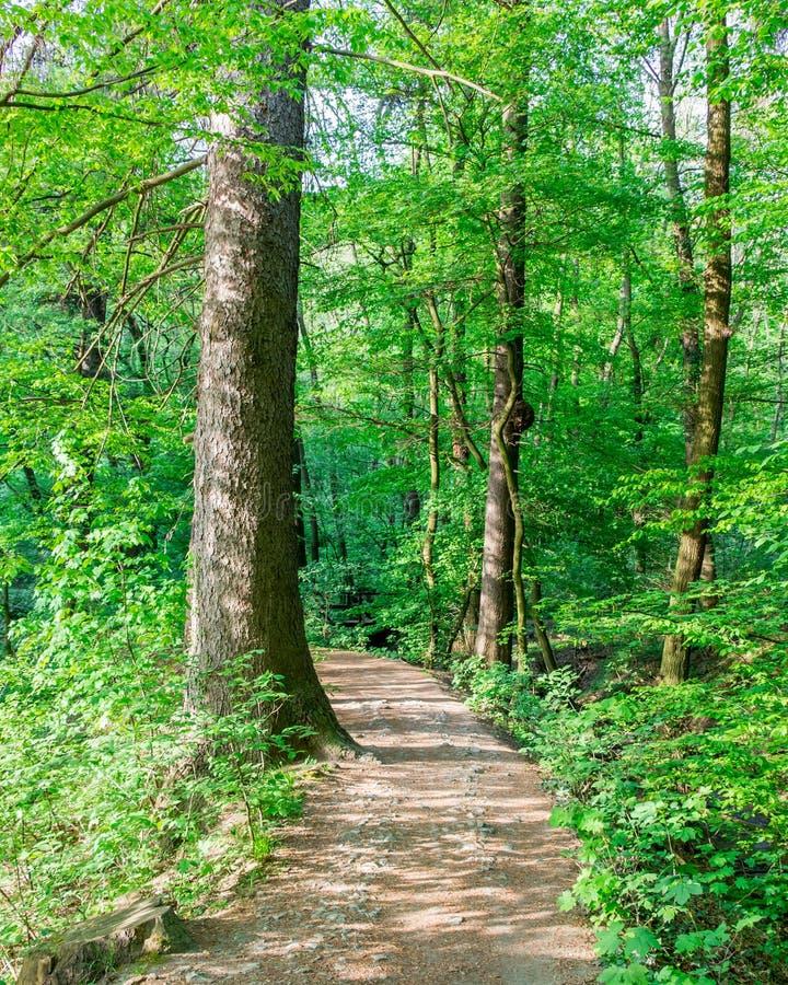 Weg door het bos royalty-vrije stock foto's
