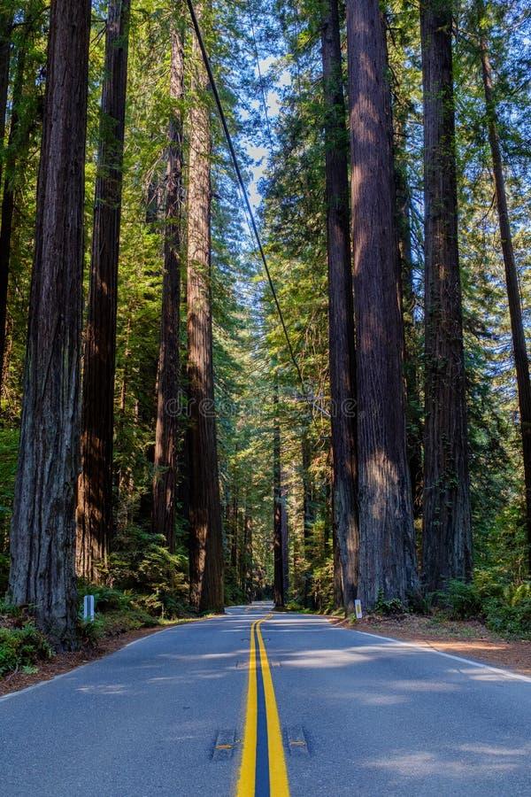 Weg door het Humboldt-Park van de Californische sequoia'sstaat stock foto's