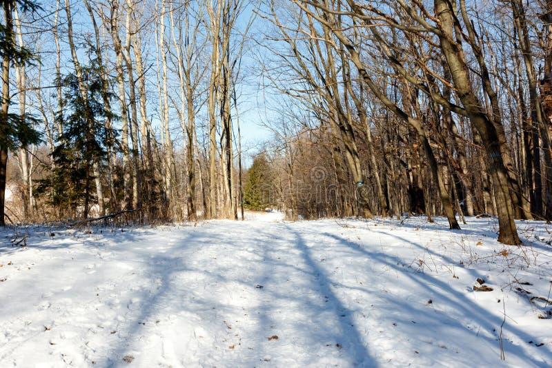 Weg door het winterbos met witte sneeuw, voetafdrukken en zonlicht royalty-vrije stock foto
