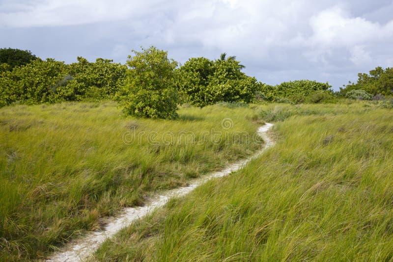 Weg door Tropisch Groen Landschap, Antigua royalty-vrije stock afbeelding