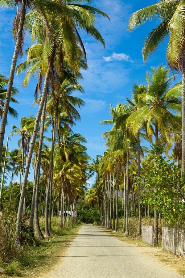 Weg door van kokospalmen die tot strand leiden Eiland Flores indonesië royalty-vrije stock fotografie