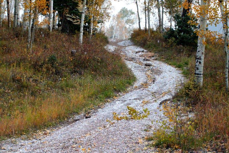 Weg door Zuidelijk Utah Aspen Grove royalty-vrije stock foto's