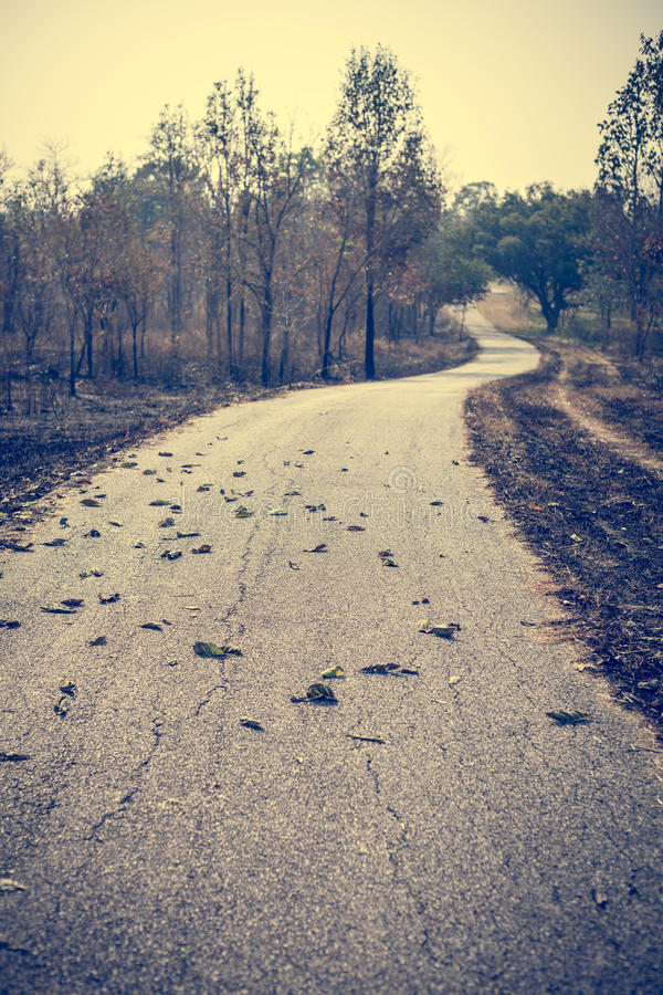 Weg in droog bos stock fotografie