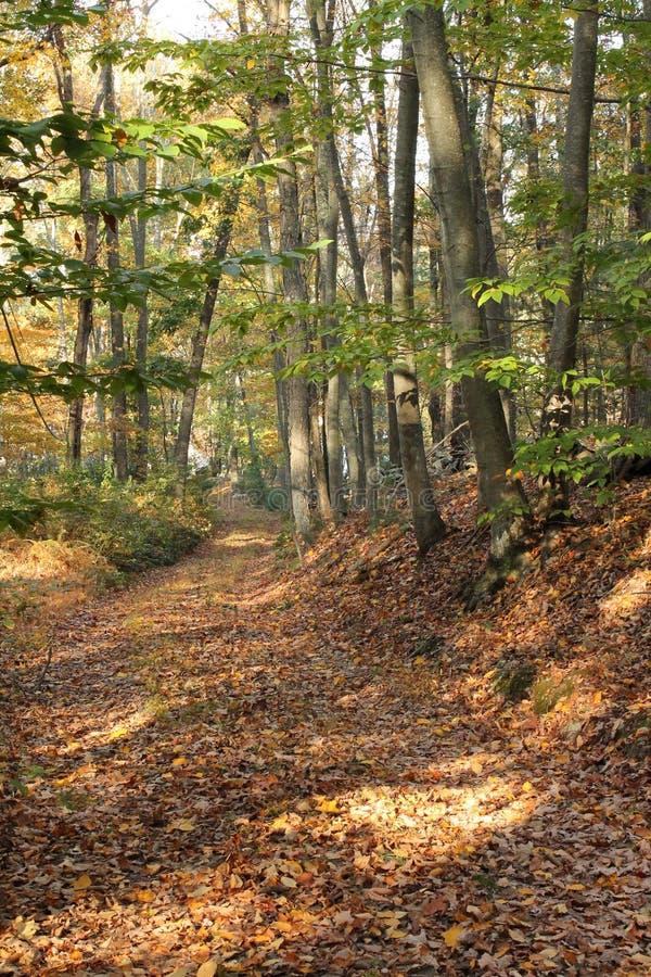 Weg durch Autumn Woods in Connecticut lizenzfreie stockbilder